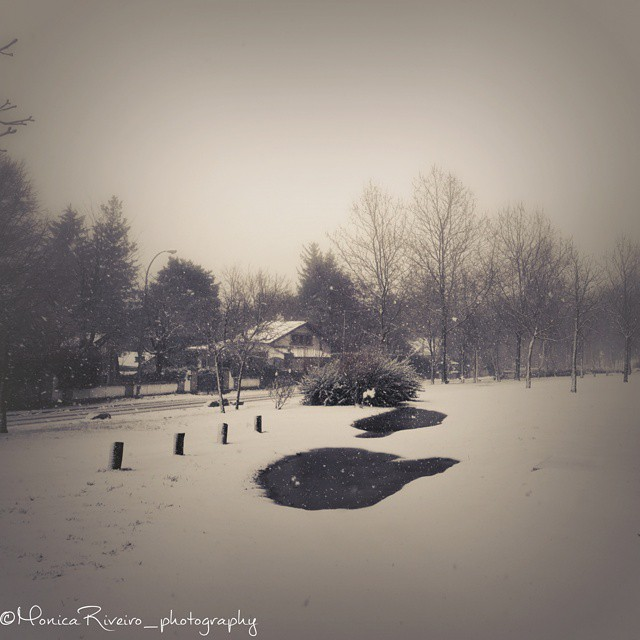 nevada monica 3